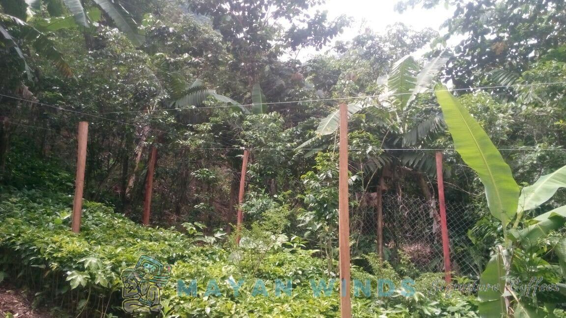 Siltepec